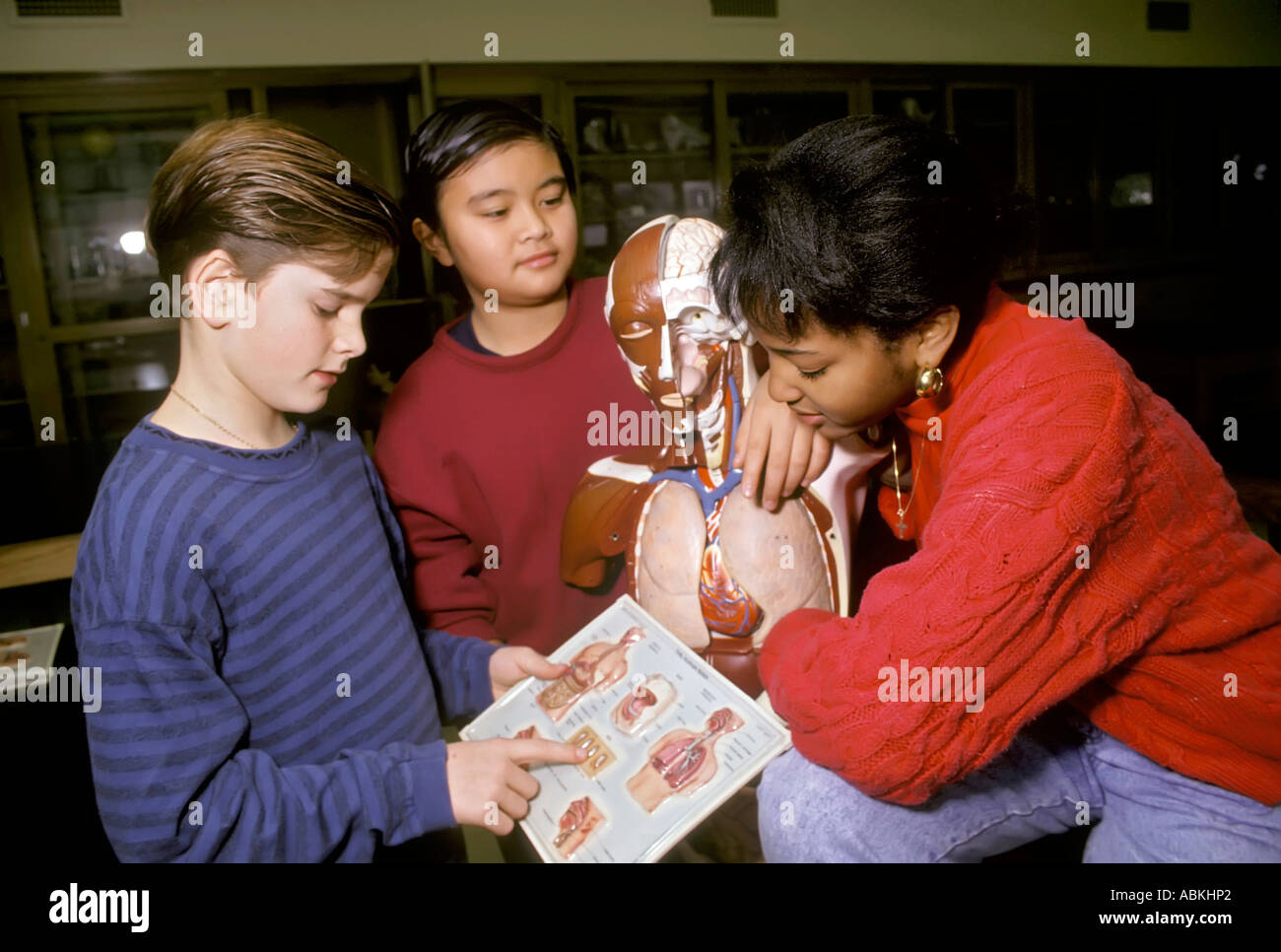 Mittelschüler / innen arbeiten an einem Gruppenprojekt Anatomie im ...
