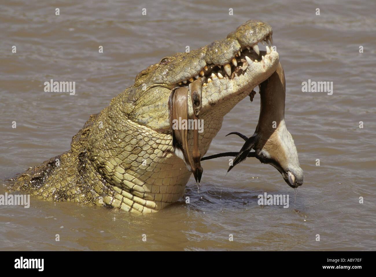 Charmant Alligator Und Krokodil Malvorlagen Bilder - Malvorlagen Von ...