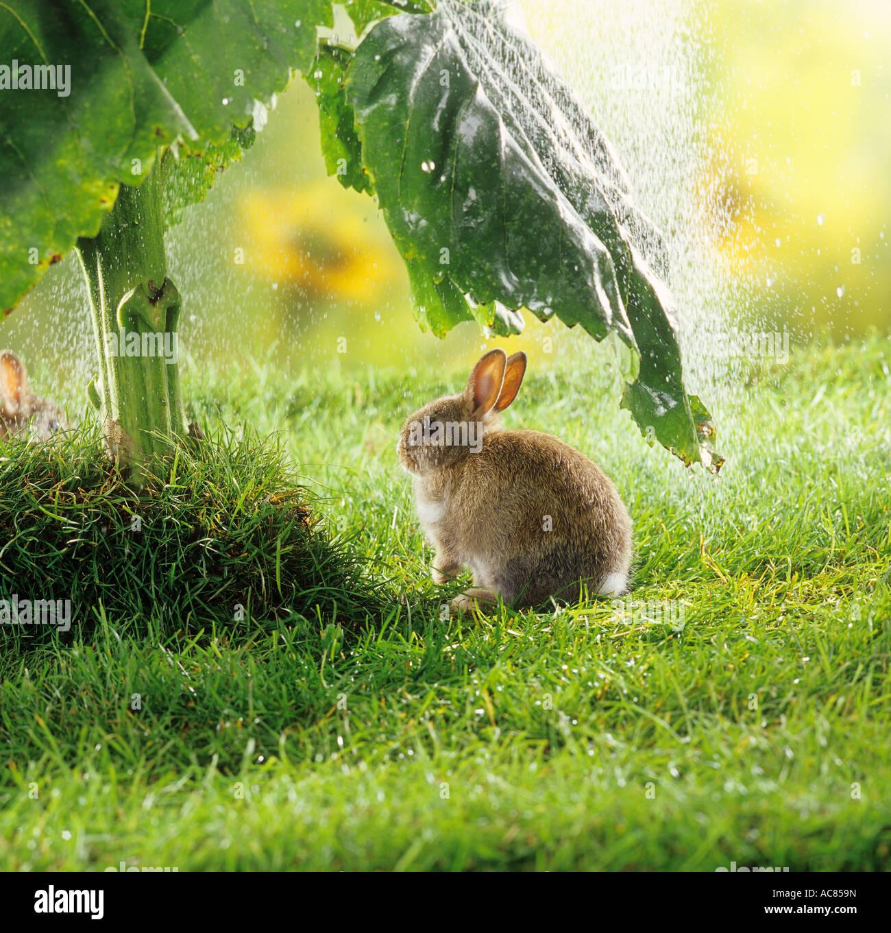 Kaninchen Regen