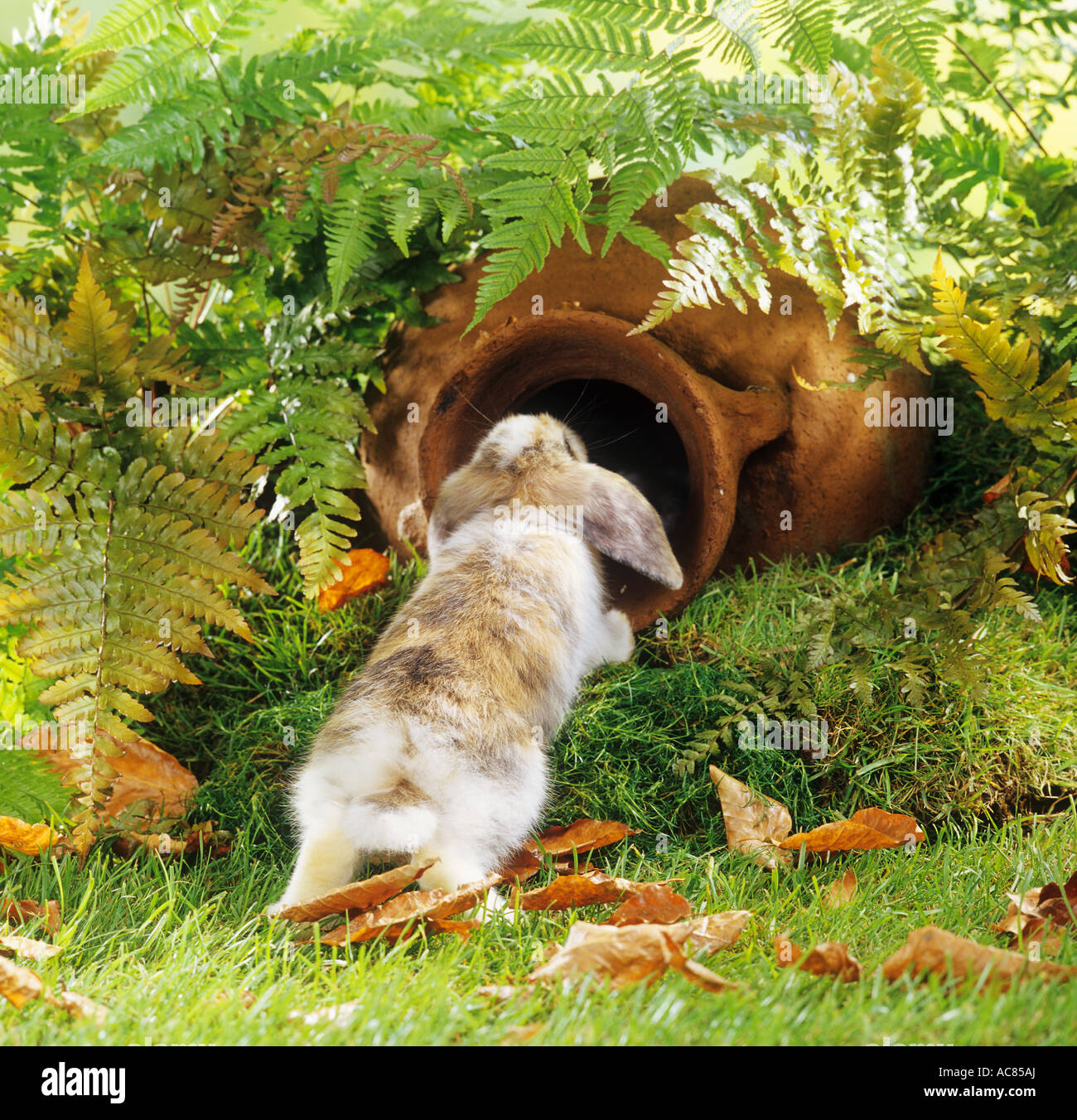 Aoung Pagmy Kaninchen Im Garten Mit Amphore Stockfoto Bild