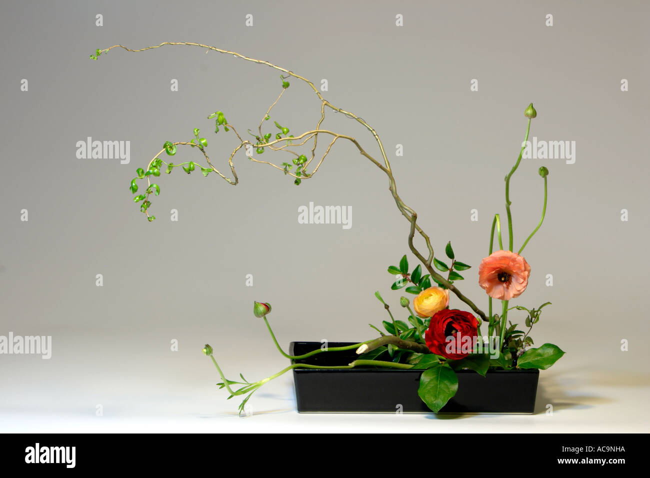 ikebana mit camelia blumen und curly willow stockfoto. Black Bedroom Furniture Sets. Home Design Ideas