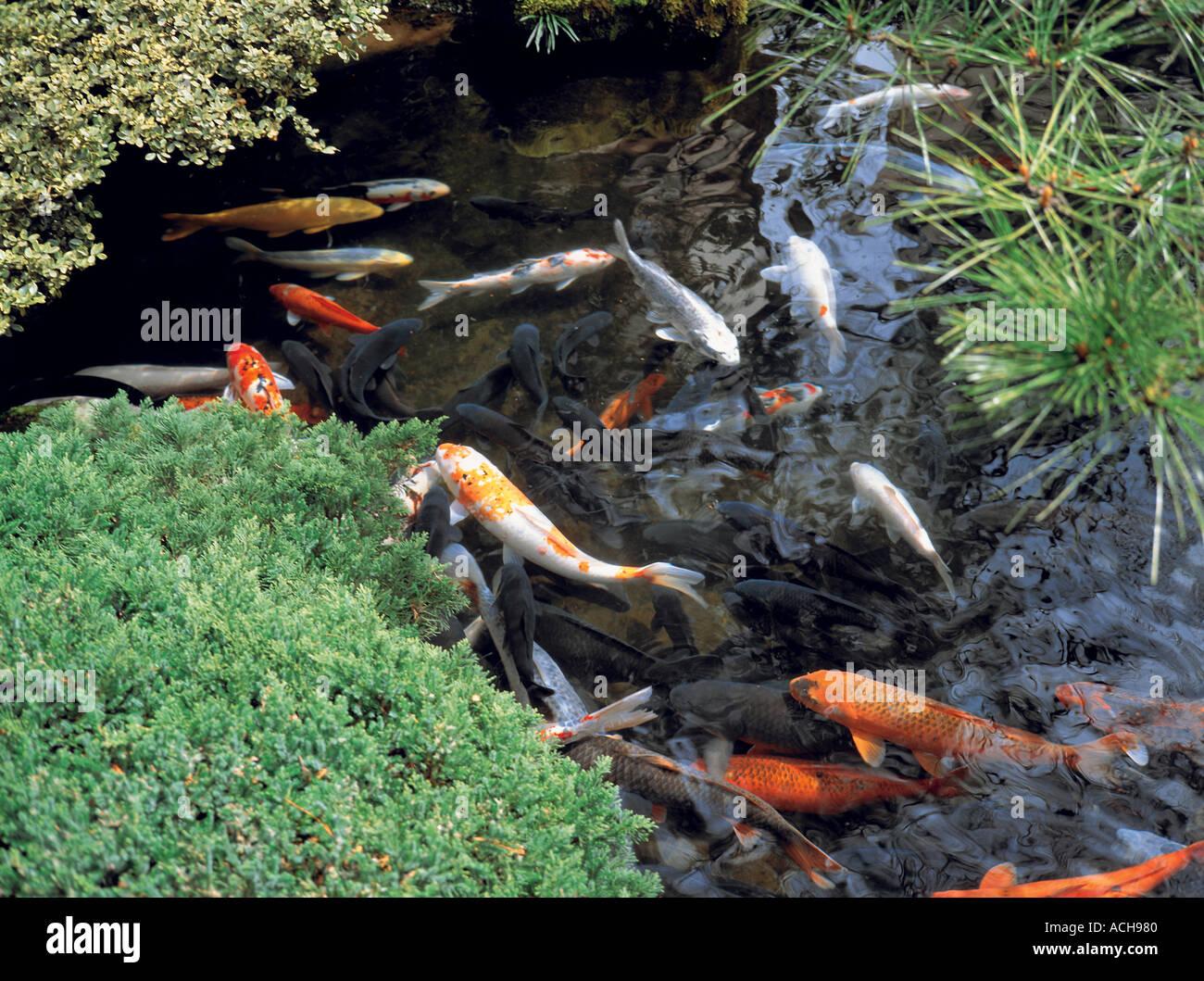 Tokyo japan fish pond stockfotos tokyo japan fish pond for Koi mit goldfischen