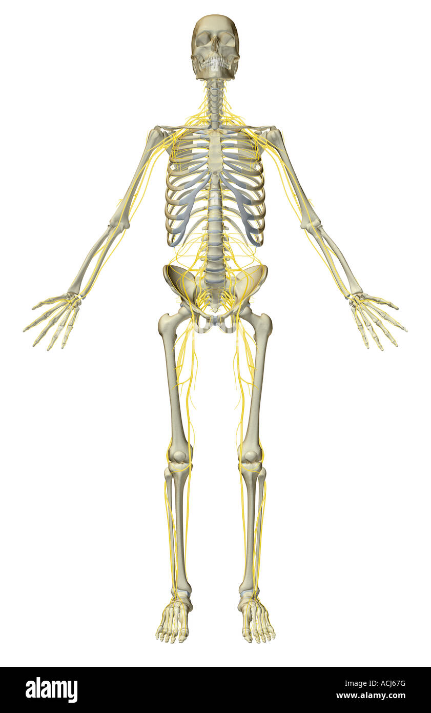 Großzügig Anatomie Von Kreditkartennummern Fotos - Anatomie Ideen ...