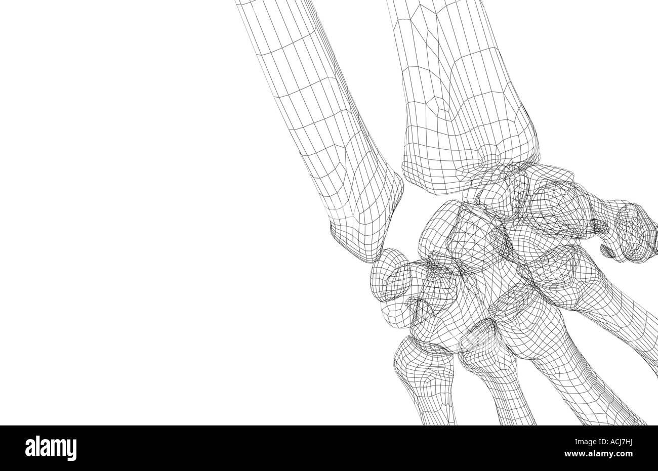 Tolle Knochen In Ihrem Handgelenk Bilder - Menschliche Anatomie ...