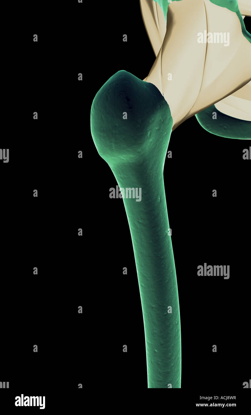 Iliofemoral Stockfotos & Iliofemoral Bilder - Alamy