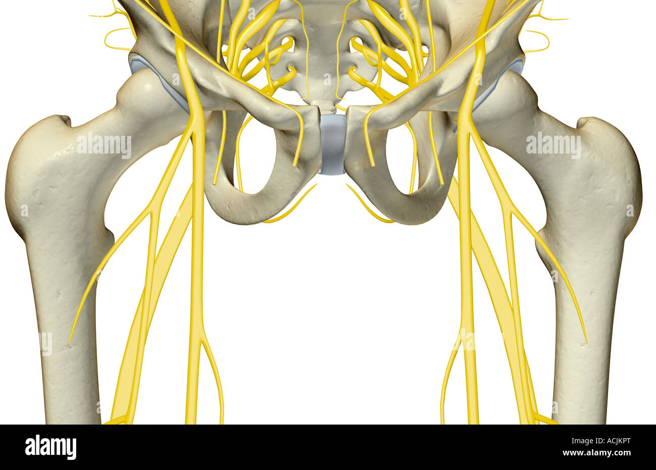 Die Nerven des Beckens Stockfoto, Bild: 13171583 - Alamy