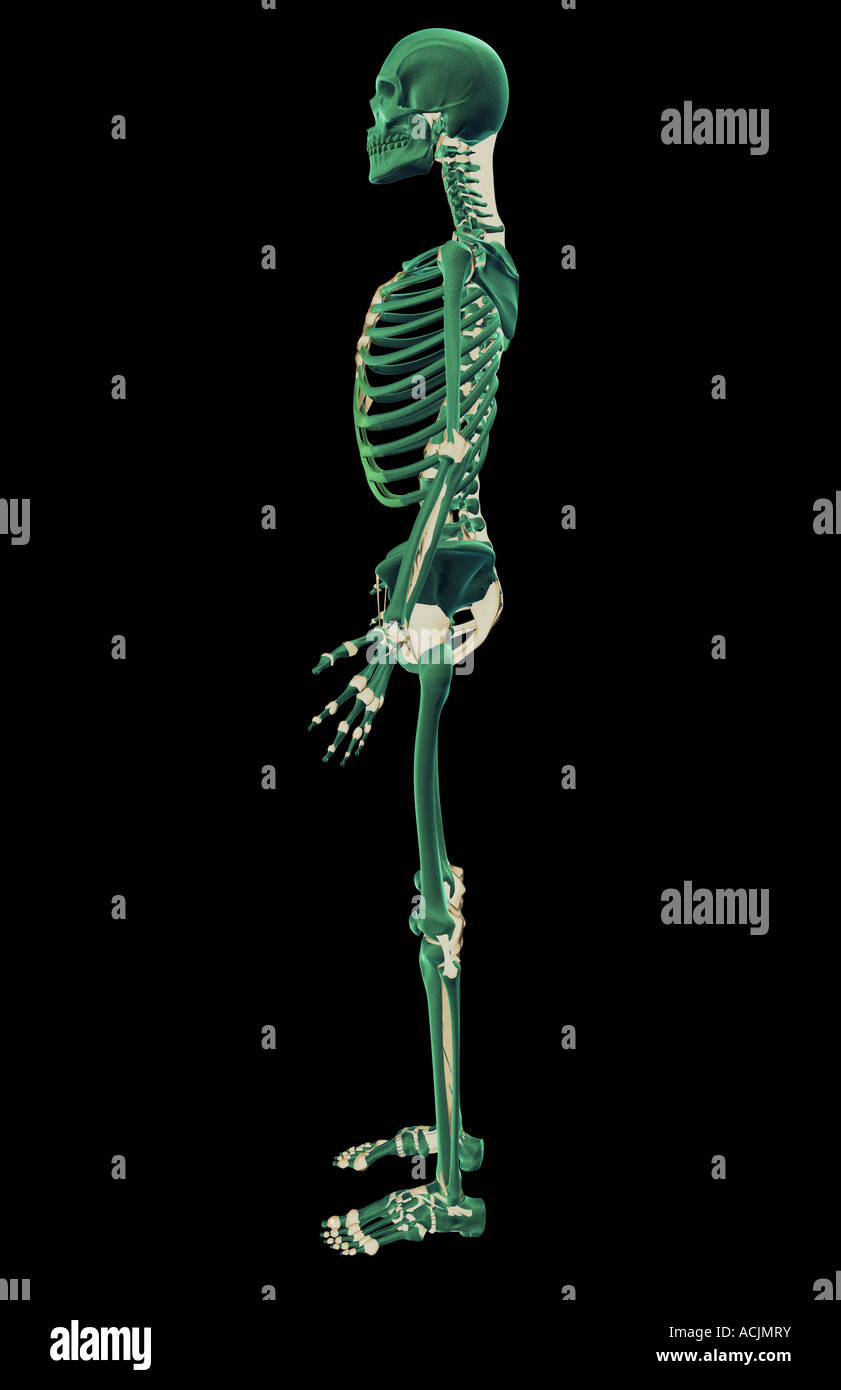 Die Bänder-system Stockfoto, Bild: 13171934 - Alamy