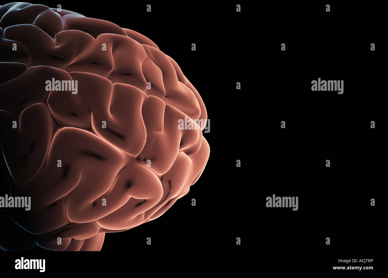 Frontal Lobe Stockfotos & Frontal Lobe Bilder - Alamy
