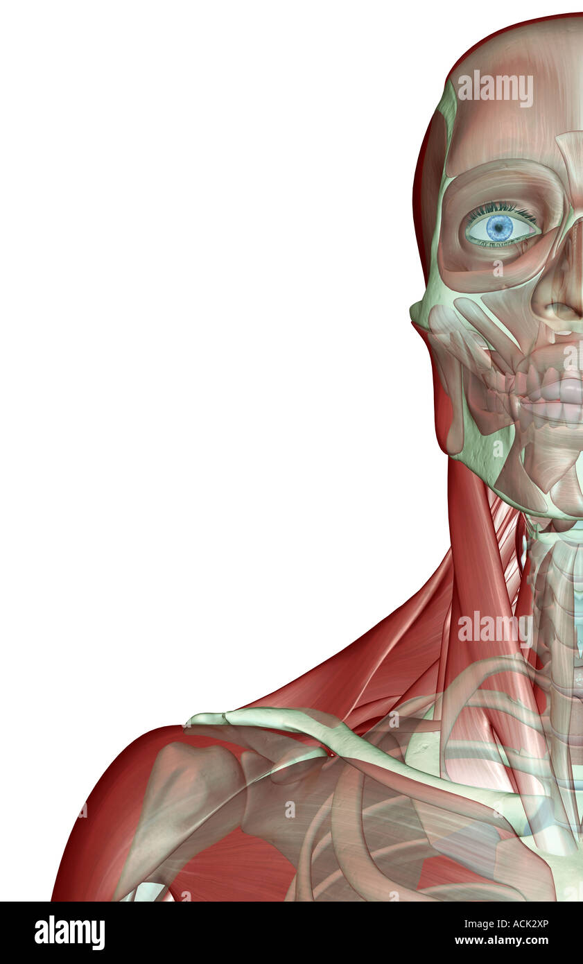 Muscles Of The Face And Neck Stockfotos & Muscles Of The Face And ...