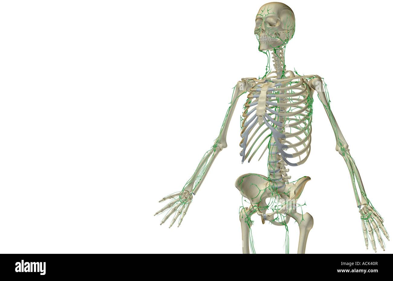 Fein Anatomie Science Olympiad Galerie - Menschliche Anatomie Bilder ...