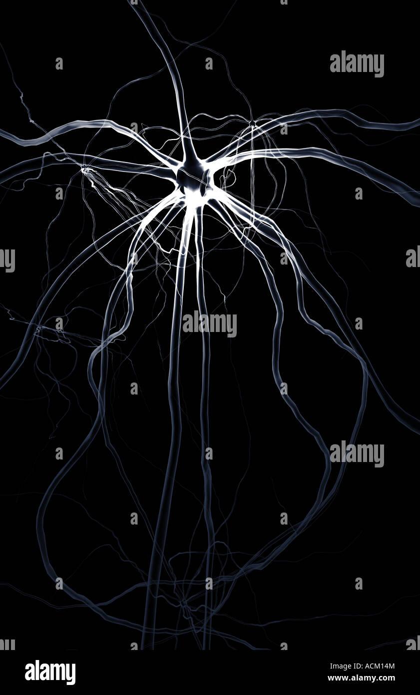 illustration motor neuron stockfotos illustration motor. Black Bedroom Furniture Sets. Home Design Ideas