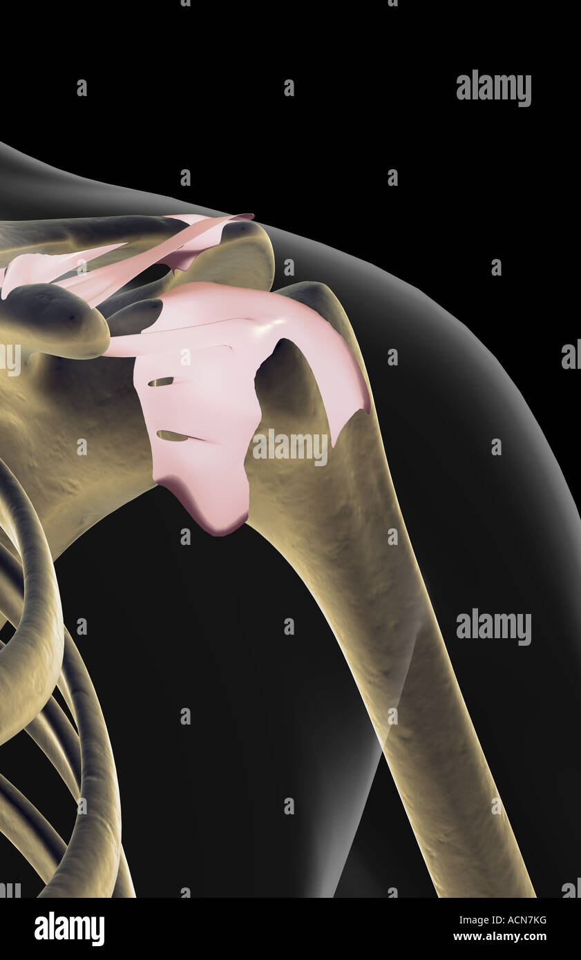 Die Bänder der Schulter Stockfoto, Bild: 13195731 - Alamy