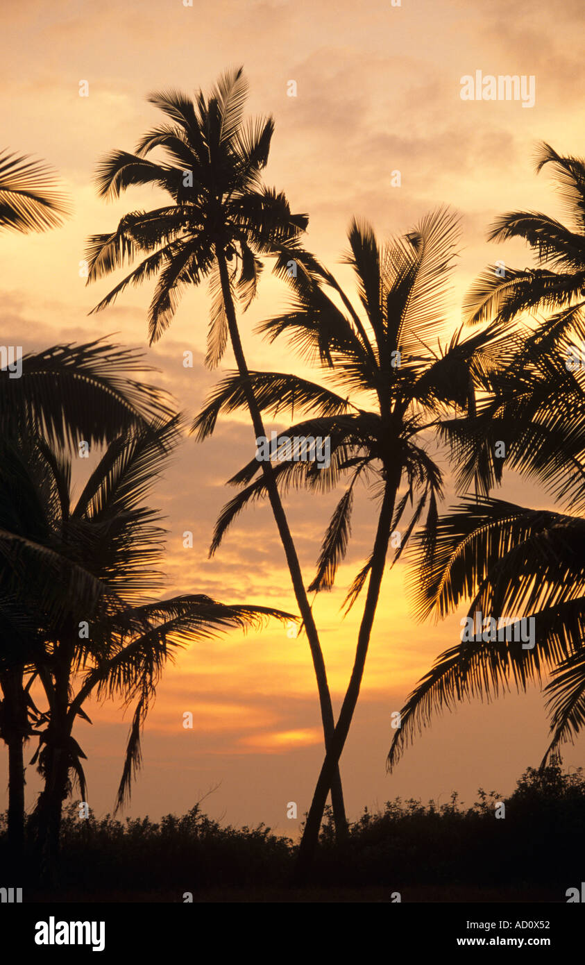 Sunset Colva Beach Goa Indien Stockfoto