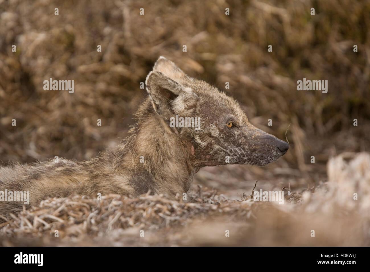 Räude Hund Stockfotos Räude Hund Bilder Alamy