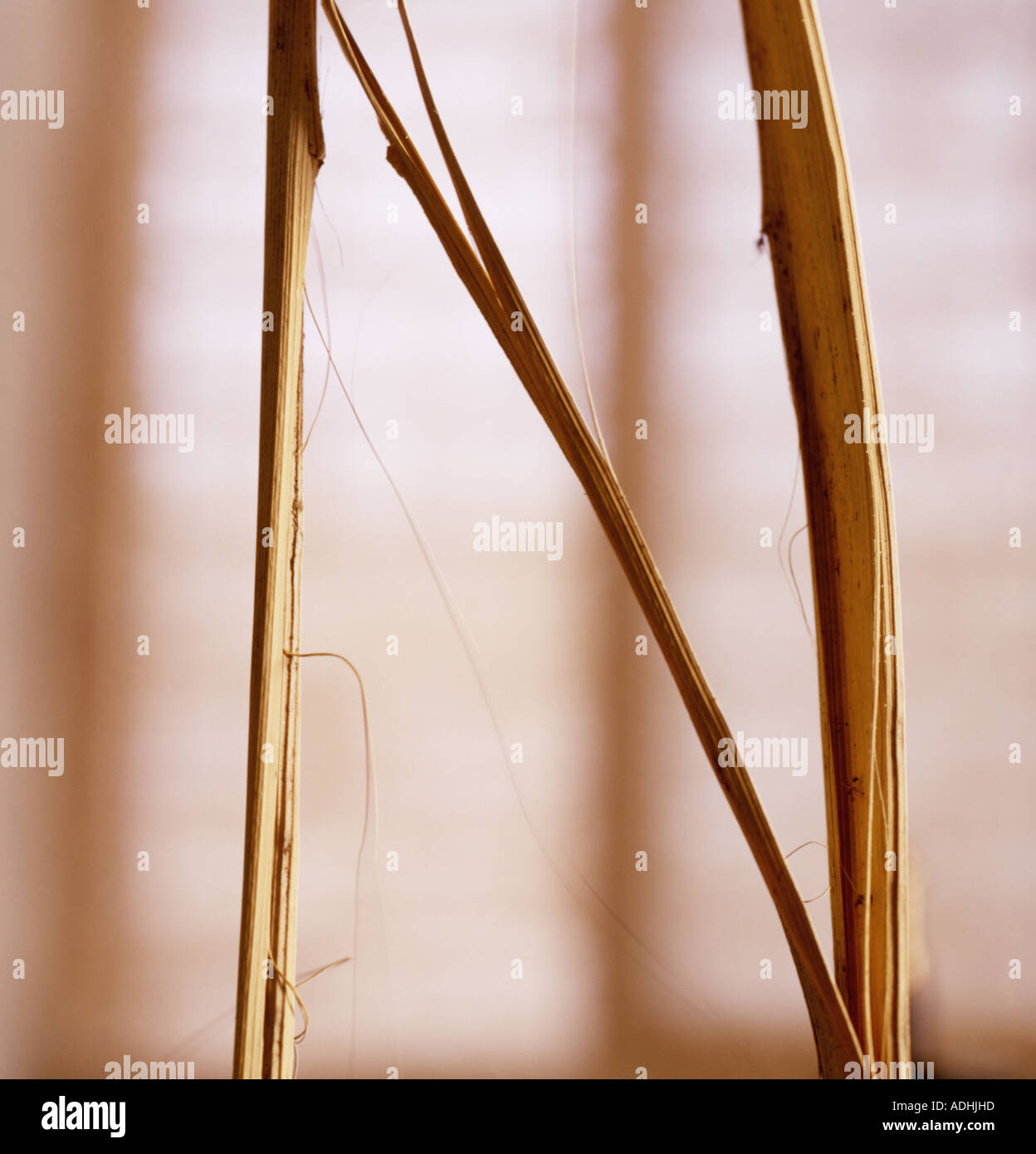 N Brief von Pampus Grass geformt Stockbild