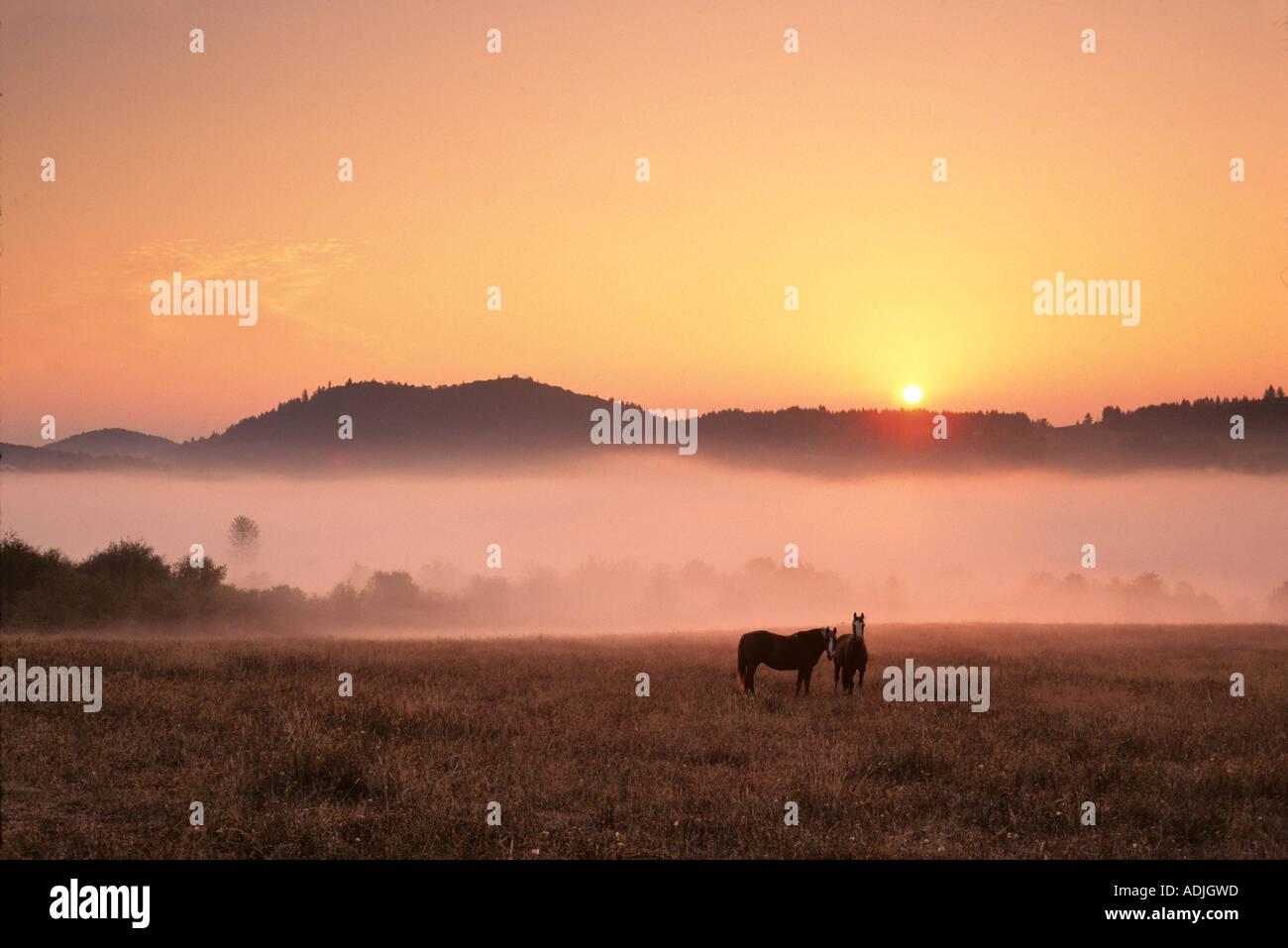 Pferde bei Sonnenaufgang in der Nähe von Monroe Oregon Stockbild