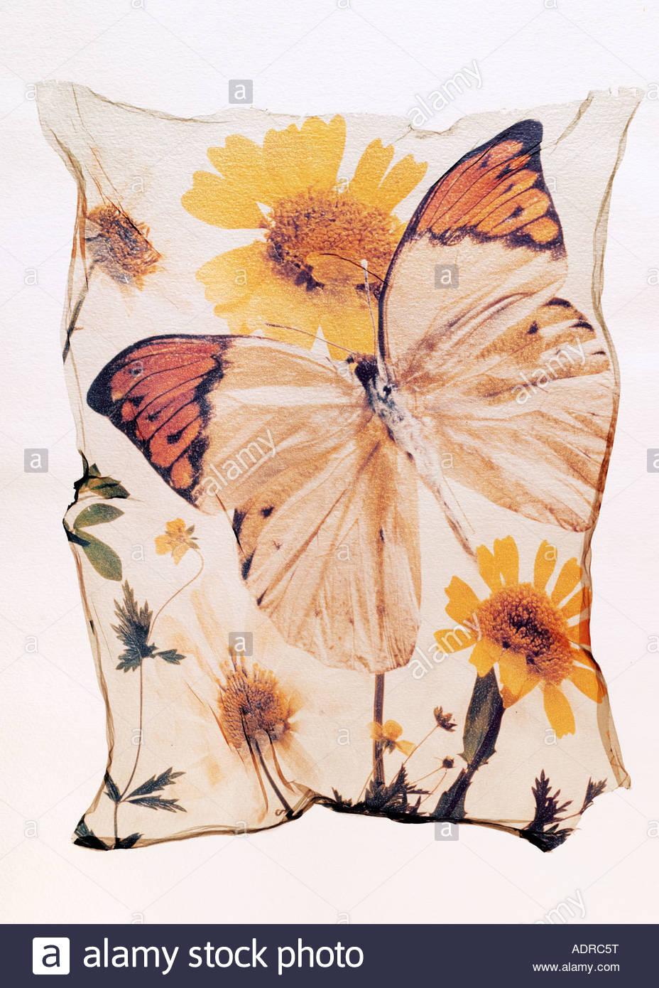 Polaroid Aufzug eines Orange gespitzt Schmetterling auf einer Blume, geflügelte geöffnet. Ein Konzept Stockbild