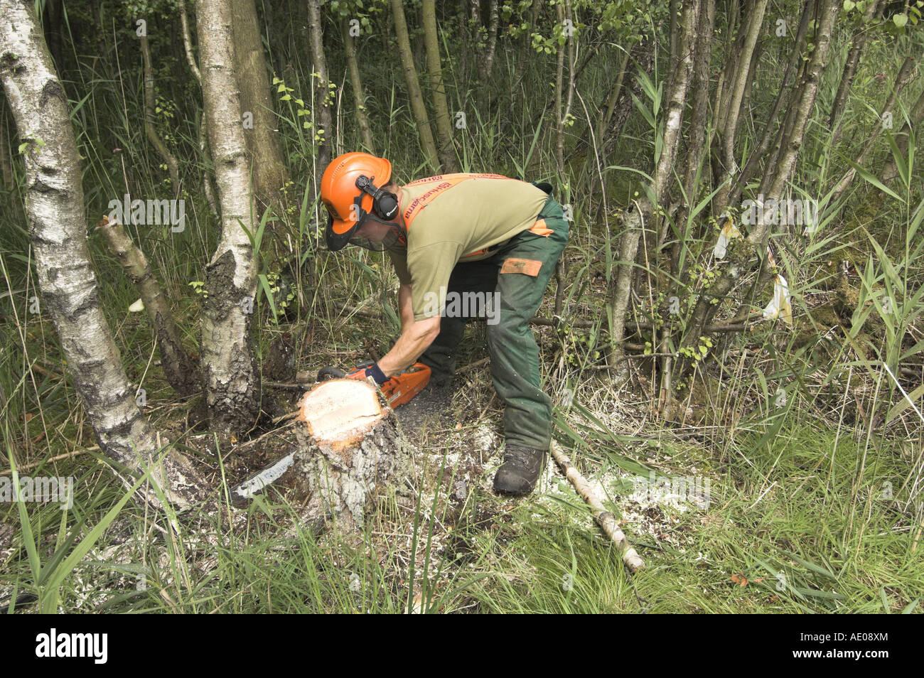 Naturschutz Arbeiter Mit Kettensage Birke Eingriff In Feuchtbiotop Baumstumpf Entfernen Loschen