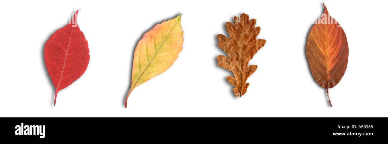 Groß Herbst Baum Mit Blättern Färbung Seite Ideen - Druckbare ...