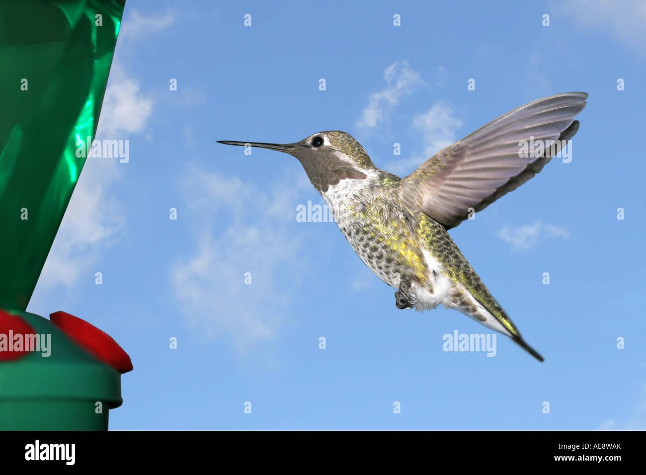 Ausgezeichnet Kolibri Feeder Färbung Seite Bilder - Framing ...