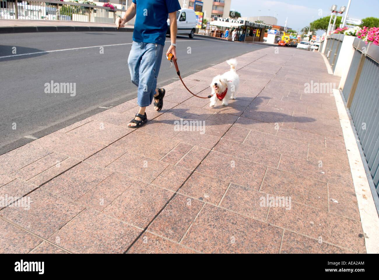 Menschenbild, die weißen Hund über Brücke im Sommer zu Fuß abgeschnitten Stockbild