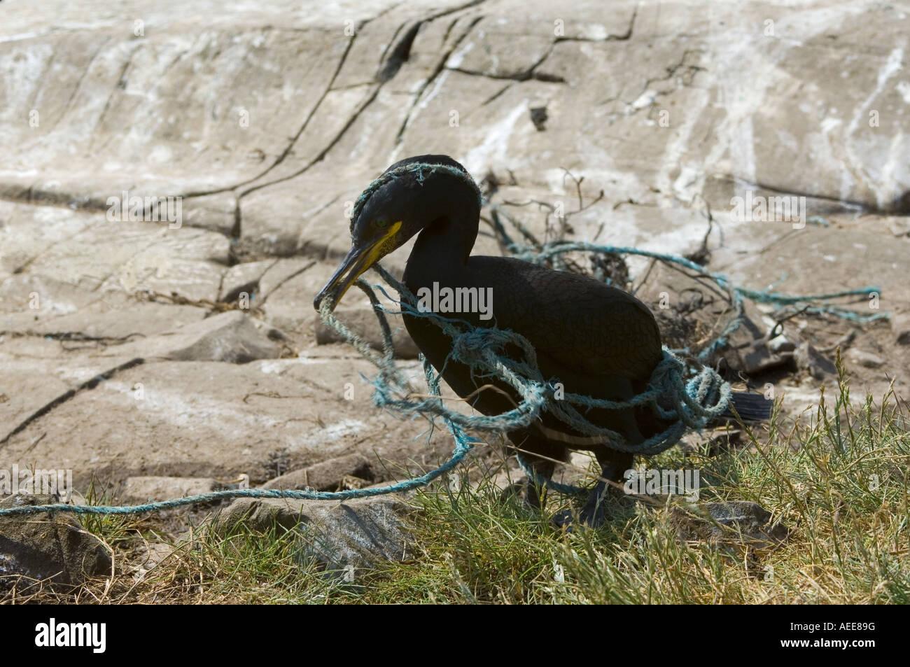 Cro Klettergerüst : Verschlungenes seil stockfotos & bilder alamy