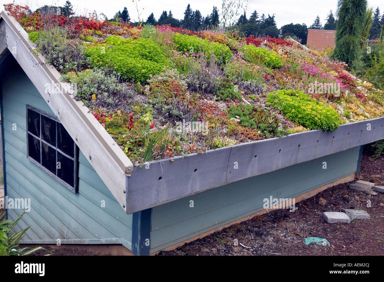 Dach des Gebäudes in saftigen Rock bedeckt Pflanzen Garten Oregon Oregon Stockbild