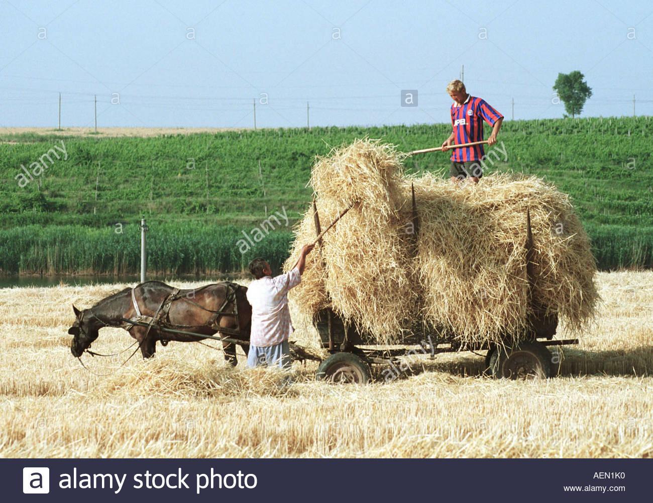 Landwirtschaft Rumänien