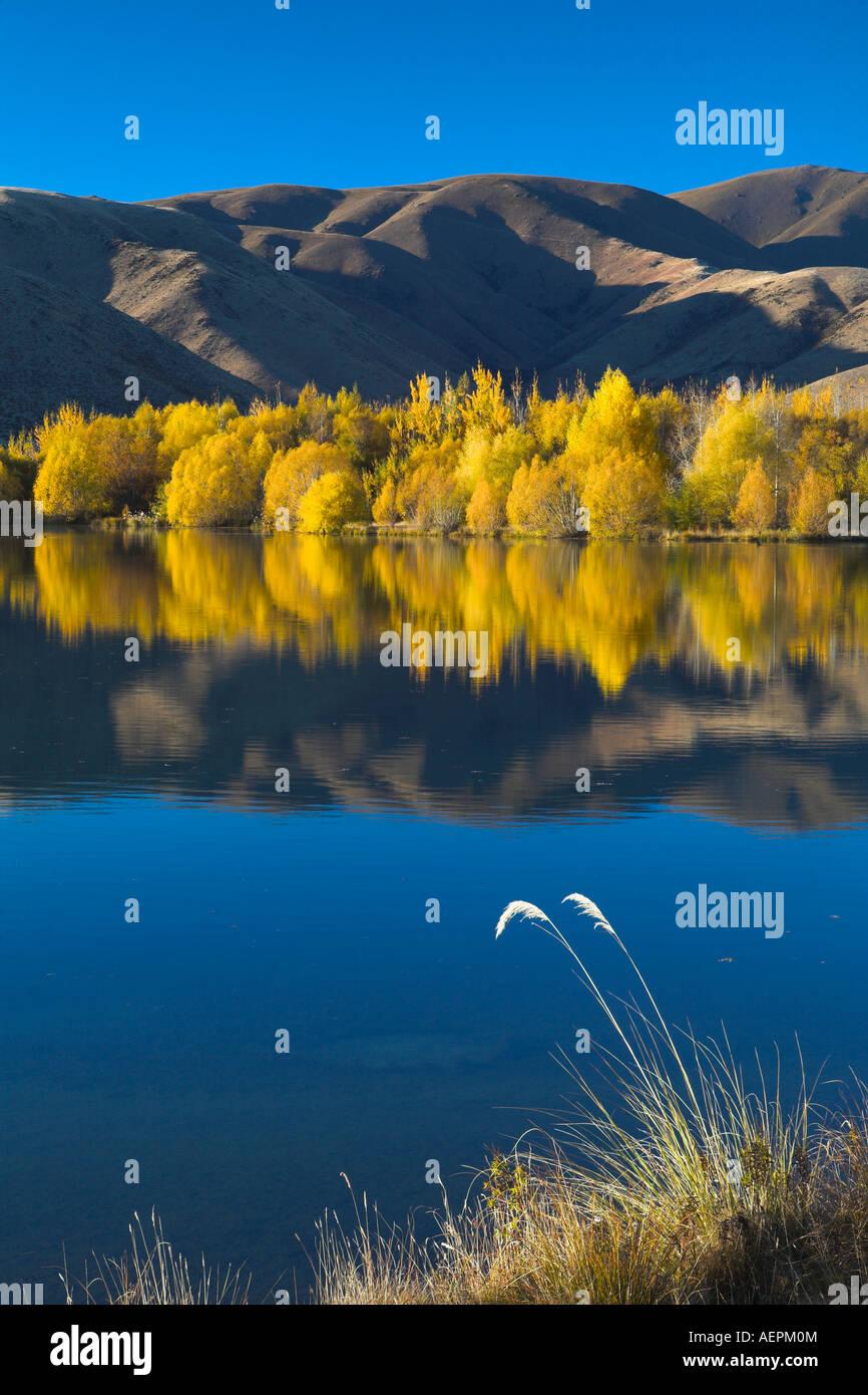 Intensive goldenes Laub an einem See in der Nähe von Twizel, Südinsel, Neuseeland Stockbild