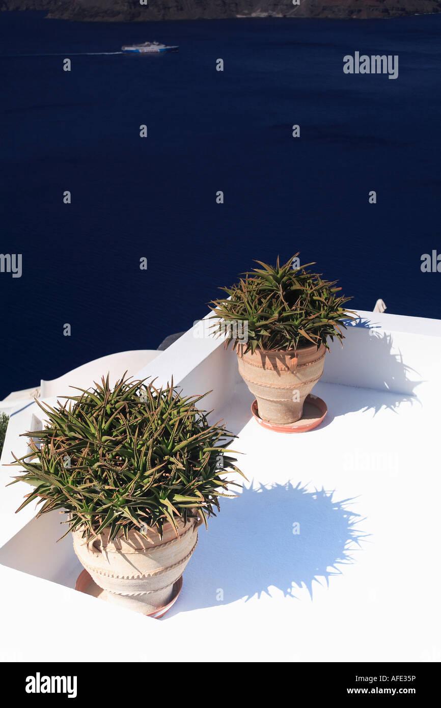 Zwei Große Töpfe Mit Pflanzen Auf Krassen Weißen Griechischen
