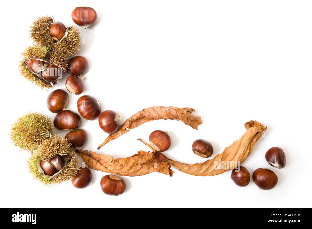 Herbst-Vorlage von Kastanien, isoliert auf weiss mit Textfreiraum Stockbild
