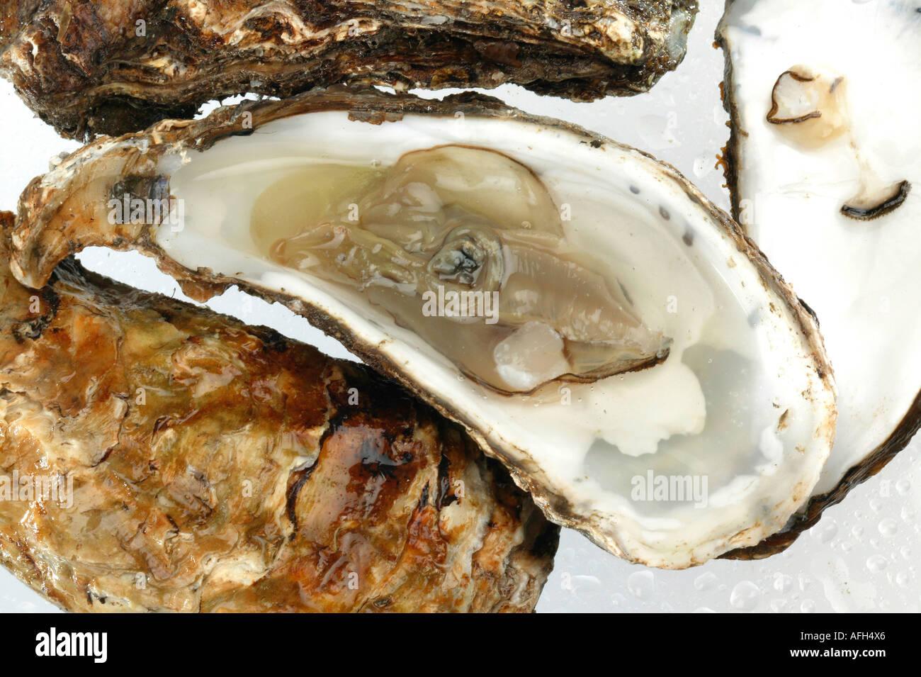 Austern auf nassen weißen Hintergrund Stockbild