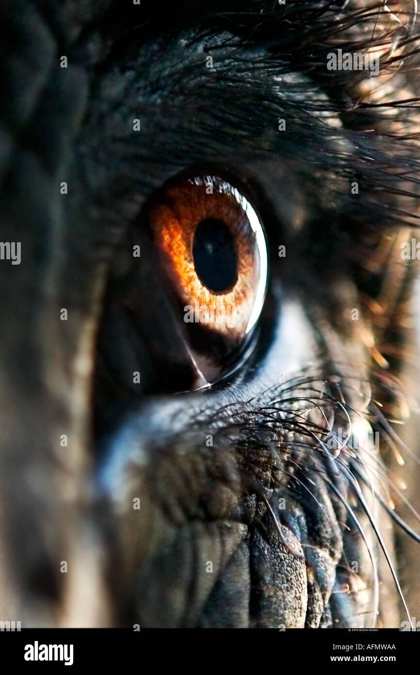 Nahaufnahme des Auges eines indischen Elefanten Jaipur Indien Stockfoto
