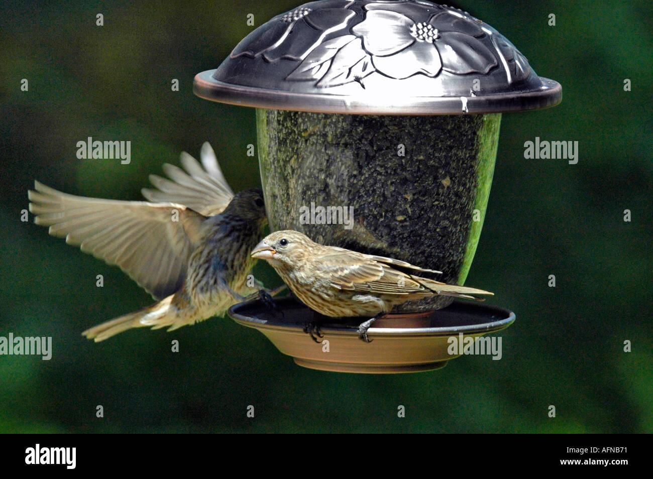 vögel essen samen in ein vogelhaus futterstation stockfoto, bild