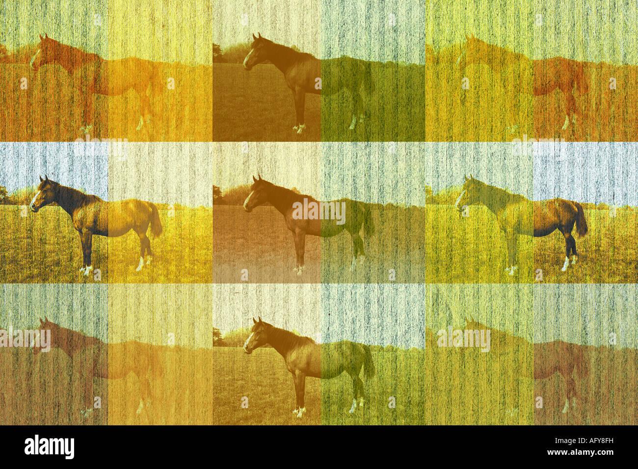 Treten Sie ein und wiederholen Sie die Abbildung der Bucht Pferde in einem Feld Stockbild