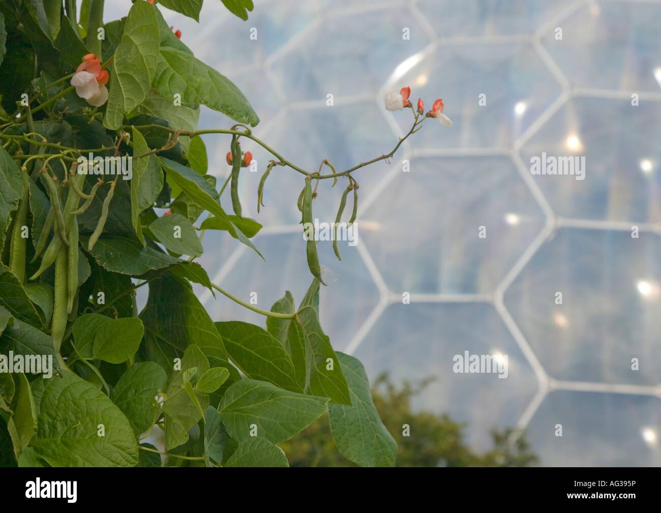 Das Eden Project ist eine groß angelegte Umwelt Komplex in England. Das Projekt befindet sich in einem altem Stockbild