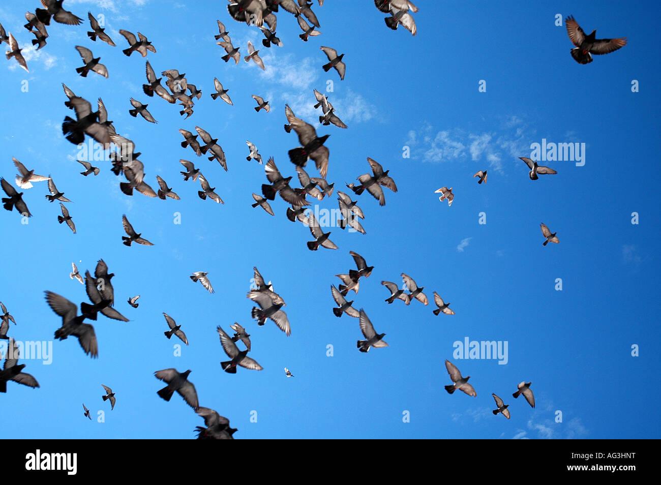 Vögel fliegen über der alten Stadt Dubtrovnik, Kroatien Stockbild