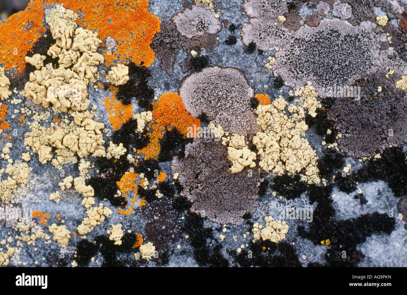 Antarktis-Moss Stockbild