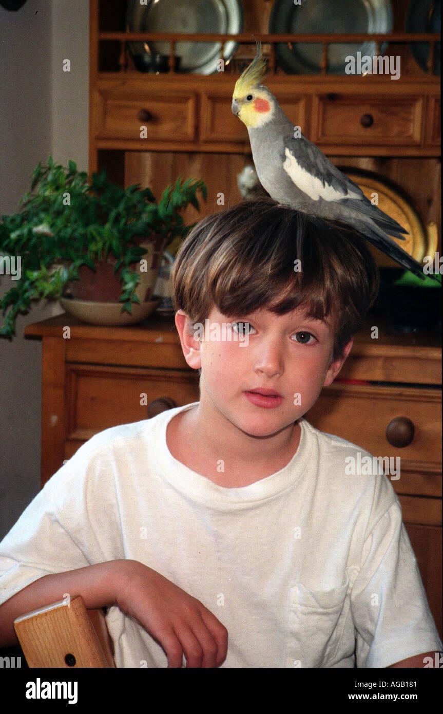 Junge mit einem Nymphensittich auf seinem Kopf. Stockbild