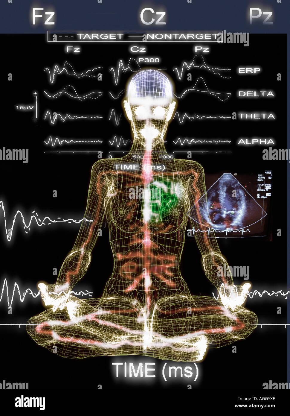 physiologischen Eigenschaften des menschlichen Körpers Stockbild