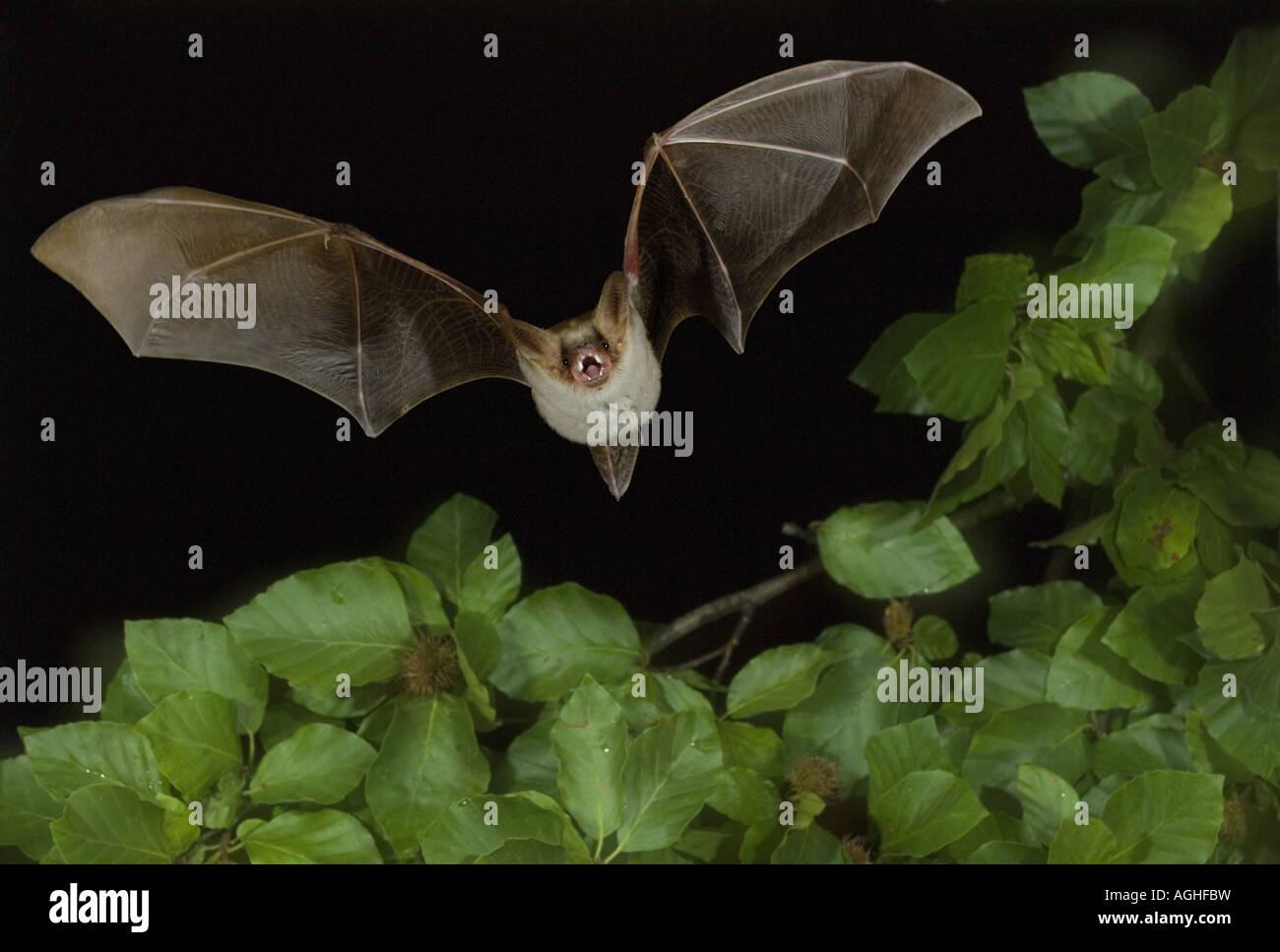 bat animal cutout stockfotos bat animal cutout bilder alamy. Black Bedroom Furniture Sets. Home Design Ideas