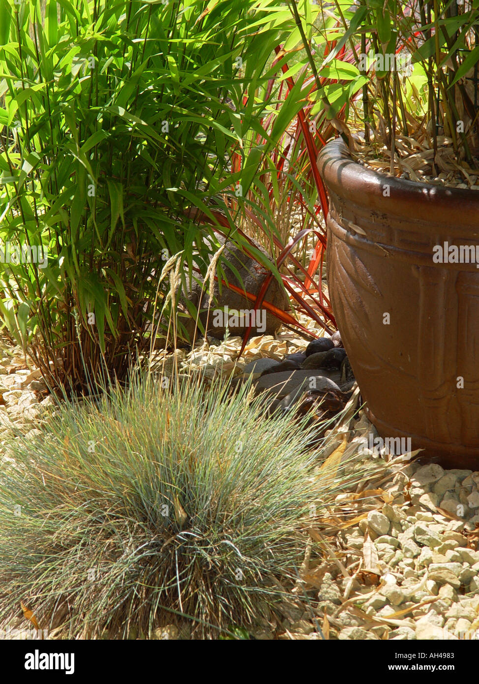 Bambus Garten Gräser Imperata Festuca glauca Stockfoto, Bild ...