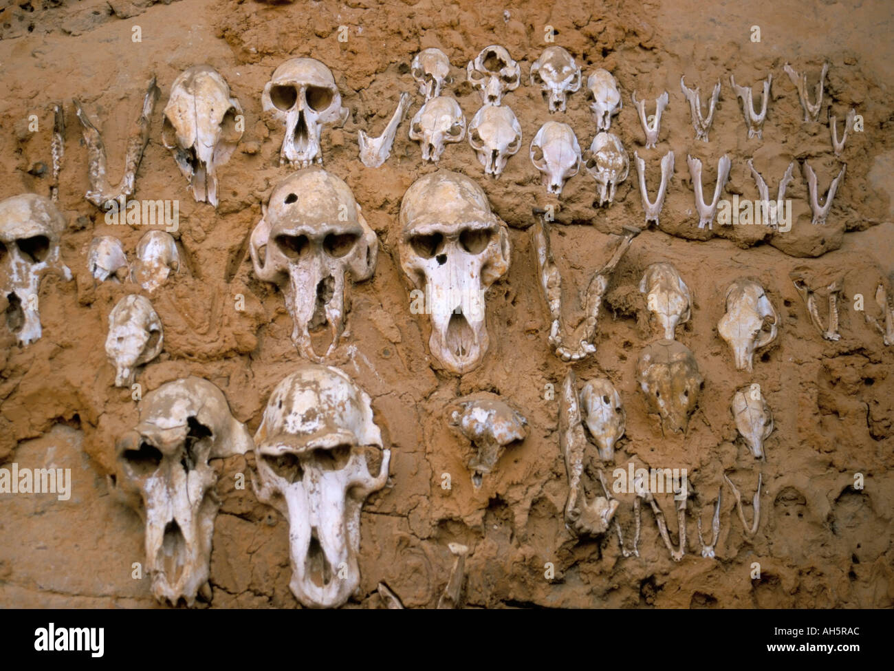 Affe Schädel eingebettet in Schlamm-Mauer zum Schutz gegen böse Geister Dogon Dorf von Telle UNESCO World Heritage Site Mali Afrika Stockbild