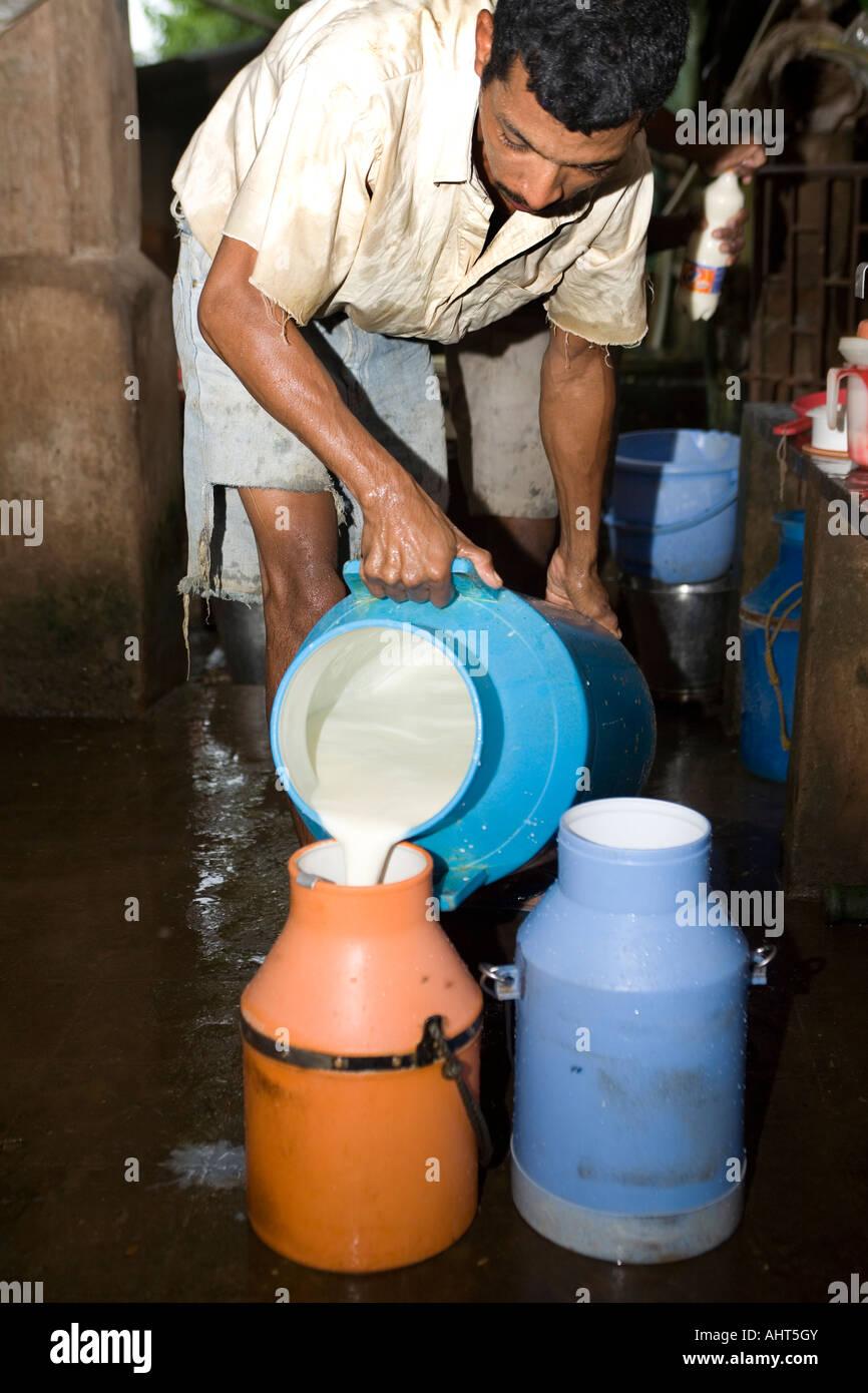 Molkerei Wanderarbeiter sammeln Milchleistung nach Hand Melken Kühe in einem kleinen Privat ökologischen Stockbild