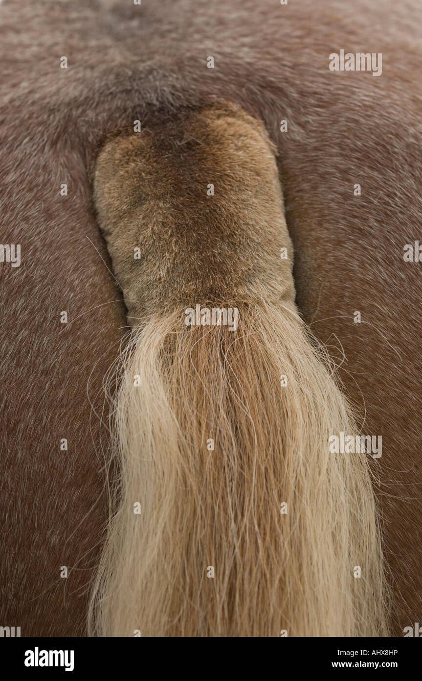 Intimrasur Stockfotos Intimrasur Bilder Alamy