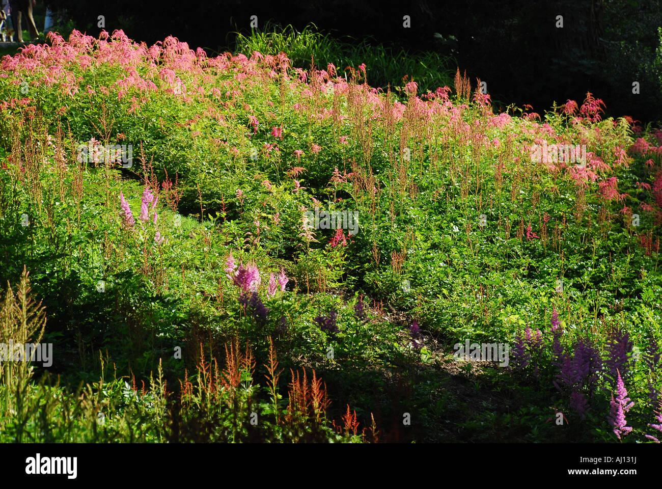 Blumenbeet Gestaltung Mehrjährig mehrjährige pflanze blumenbeete hoehenpark killesberg stuttgart