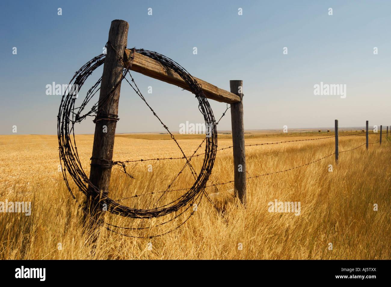 Stacheldraht Zaundraht umwickelt Bauernhof Zaun für zukünftige ...