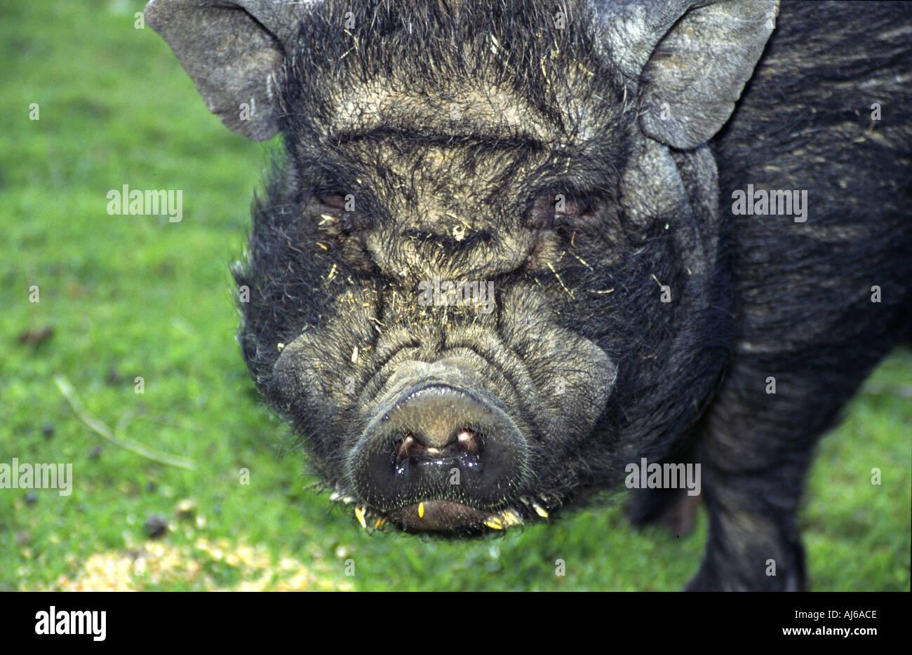 Tipp für dicke Schweine Große Schwänze engen Teens