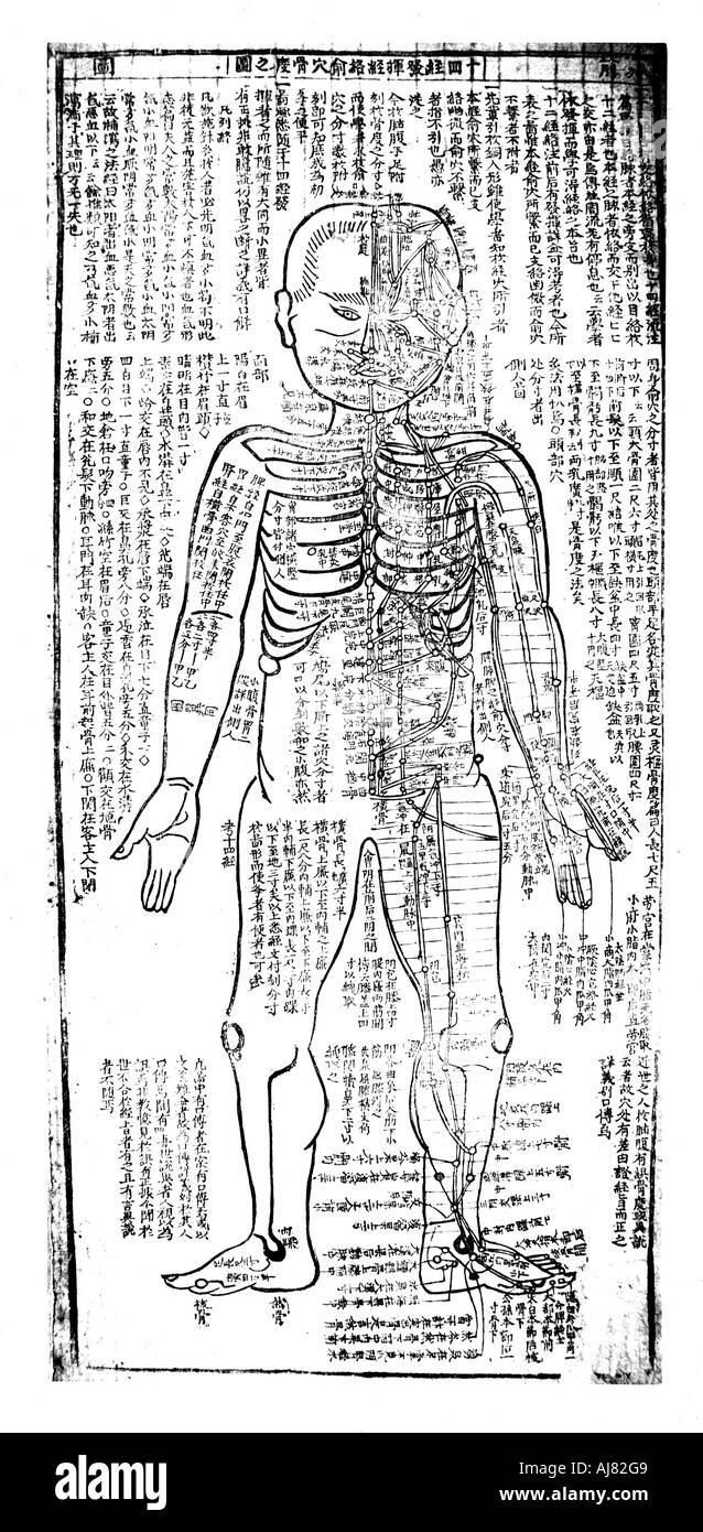 Fein Der Körper Diagramm Ideen - Menschliche Anatomie Bilder ...