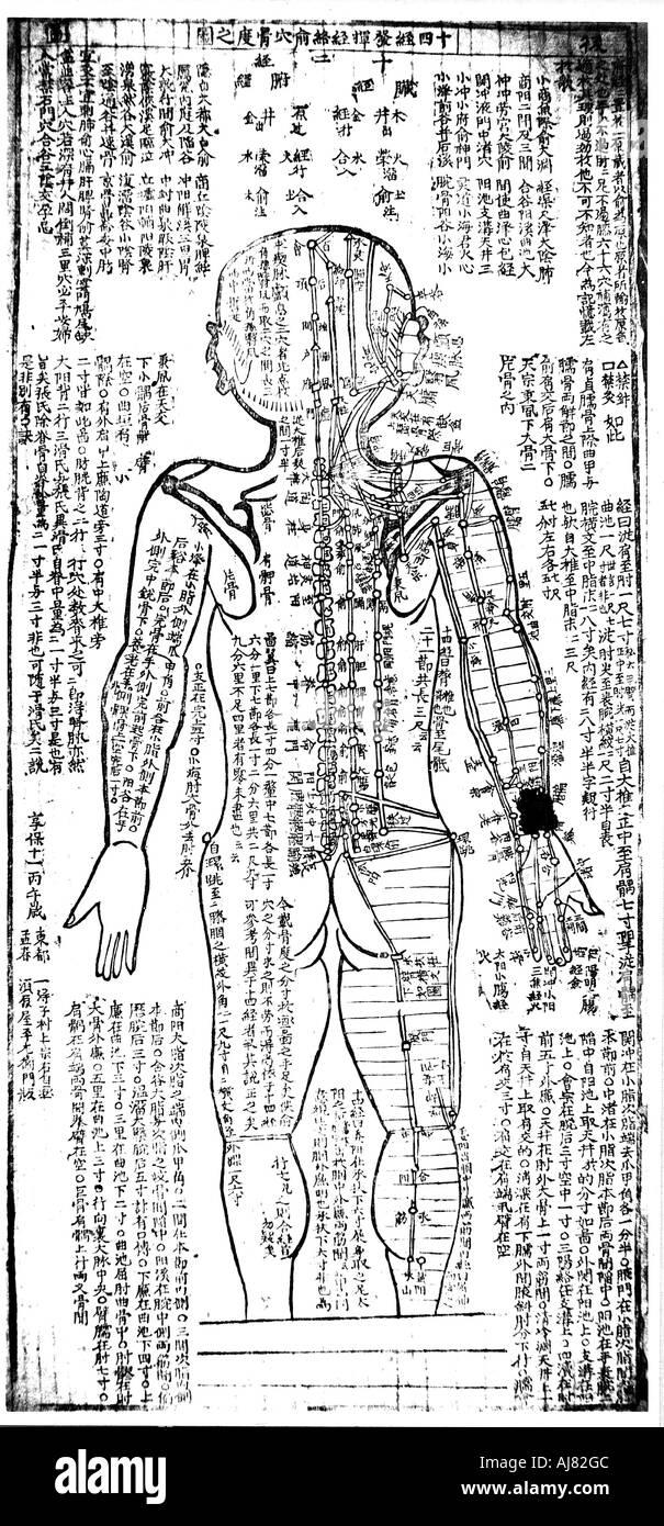 Niedlich Menschlicher Muskel Diagramm Markiert Bilder - Menschliche ...